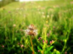 Ensueño (rodfires) Tags: life naturaleza flower macro puerto la natural venezuela flor vida margarita llovizna ordaz floresita matica