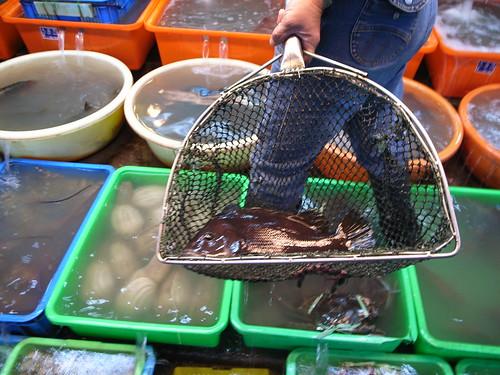 富基漁港:鯛魚