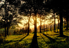 Atardecer/ Afternoon (zubillaga61) Tags: trees forest landscape atardecer arboles paisaje bosque larraitz