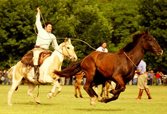 Arrglese como pueda (Eduardo Amorim) Tags: horses horse southamerica argentina criollo caballo cheval caballos cavalos pferde cavalli cavallo cavalo gauchos pferd pampa hest hevonen chevaux gaucho  amricadosul hst gacho  campero amriquedusud provinciadebuenosaires  gachos  sudamrica sanantoniodeareco suramrica amricadelsur  areco sdamerika crioulo caballoscriollos criollos magicdonkey   pampaargentina camperos americadelsud  crioulos cavalocrioulo americameridionale caballocriollo campeiros campeiro eduardoamorim cavaloscrioulos mastersoflifegallery pampaargentino