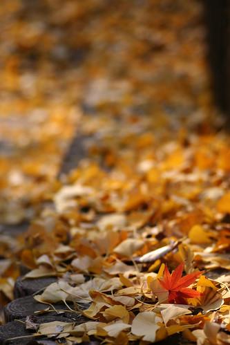 bye bye, fall 07