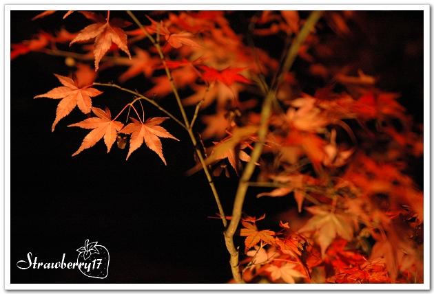 20071121京都永觀堂夜楓(6)