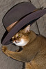 Lita in Kevins hat (key lime pie yumyum) Tags: new its hat delete10 cat delete9 myself delete5 delete2 delete6 delete7 flash save3 delete8 delete3 delete delete4 save save2 cant just help got inthe abyssinian folio lita okay acat ruddy morecats