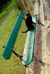 Cat's eyes - Olhos de gato - 3 (* starrynight1) Tags: winter black tree portugal cat garden bench geotagged eyes kat chat noir hiver negro banco jardin olhos preto yeux ojos gato preta jardim stray oeiras invierno katze cath  macska inverno gatto  rvore garten nero negra kot kedi giardino katt tera trdgrd kissa pantera abandonado    katu felissilvestriscatus hauskatze pisic     kokadomc