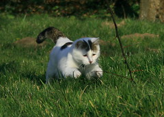 Run Chester, run... (baloochester(more than slow)) Tags: cats cat chats chat adorable chester gato gatti baloo kissable novideo bestofcats betterthangood goldstaraward baloochester