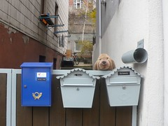 Wachhunde (Stuttgart-Gablenberg) (regionalblind) Tags: stuttgart alltag regionstuttgart regionalblind topopgrafischesportrait philippschwarz