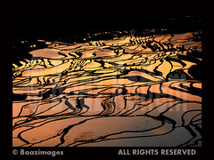 AN AMAZING SUNRISE (BoazImages) Tags: china travel red sky hot reflection water sunrise landscape amazing scenery asia rice 45 fields agriculture irrigation yuanyang yunna  abigfave  aplusphoto diamondclassphotographer flickrdiamond boazimages