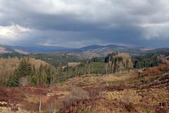 IMG_0789 (David Rowe) Tags: scotland aberfoyle dukespass trossachsnationalpark