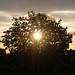 Zie de zon schijnt door de bomen (by evil nickname)