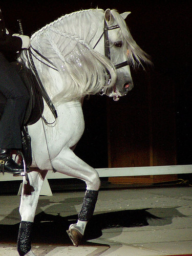 andalusian horse by ehorsegreece.