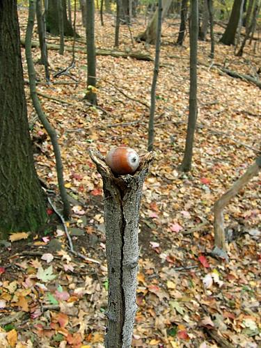 acorn on a stick