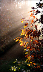 Fairy Autumn (Eltjo Poort) Tags: autumn light sun sunlight nature rays impressedbeauty eltjopoort