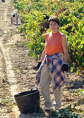 VENDIMIAS 07 --024 (fotomatonazo) Tags: salazar sajazarra vendimias