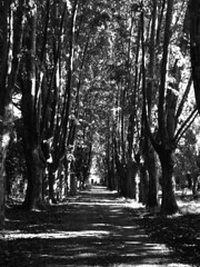 my playground (volvidejapon) Tags: street trees blackandwhite bw argentina woods buenosaires rboles camino bn bosque spegazzini claroscuro allrightsreserved instantfav volvidejapon todoslosderechosreservados volvidejapon volvidejapon