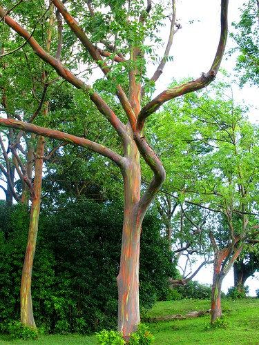 LOOK AT THE COLOUR OF THE TREE TRUNKS!
