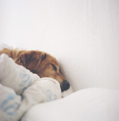 (delideladelo) Tags: dog white berlin sleep dreamming