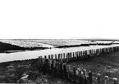 1970's, Eastern Scheldt view, low tide (doc(q)man) Tags: ocean sea blackandwhite bw seascape abstract water netherlands contrast landscape tide zeeland pole lowtide docman dike oosterschelde zuidbeveland krabbendijke easternscheldt ebtide