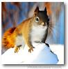 Winter in Maine (Nikographer [Jon]) Tags: light snow color lenstagged backyard nikon squirrel december maine dec nikkor 2007 d300 80400mmf4556dvr nikographer nikond300 20071226d30007548