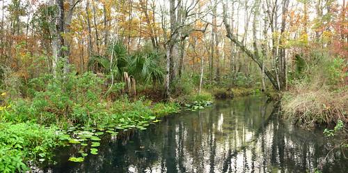 Clear spring-fed stream near Gulf Hammock, Florida, USA