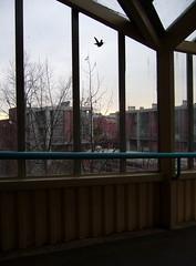 Newly Free Windowzoo Hummingbird (liquidnight) Tags: seattle streetart bird hummingbird stickers decal ovo communityart ephemeralart windowzoo