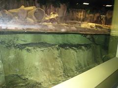 IMG_0792.JPG (joelaz) Tags: aquarium monterey acquarium