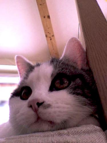 hey I'm the cat