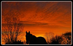 Early morning light and a curious horse (mikenpo) Tags: trees red horse orange silhouette yellow clouds sunrise ears inspire galope splendiferous anawesomeshot superbmasterpiece diamondclassphotographer flickerdiamond exemplaryshots goldsealofquality betterthangood goldstaraward naturessilhouett