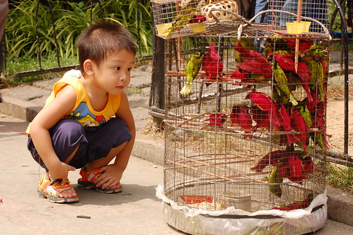 boy bird cage Pinoy Filipino Pilipino Buhay  people pictures photos life Philippinen for sale 菲律宾  菲律賓  필리핀(공화국) Philippines