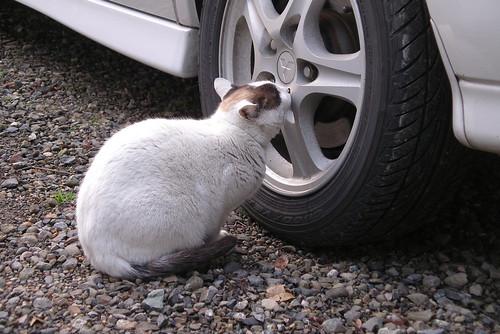 タイヤにキス