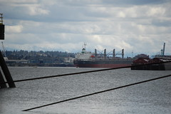 Bulk Freighters on the Columbia