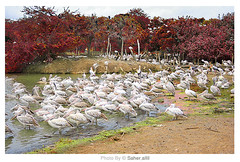 The Art of Color ,, (Nasser Bouhadoud) Tags: park camera trip color art canon thailand eos 350d bangkok 2006 safari pure nasser brids brid the saher ناصر allil بوحدود