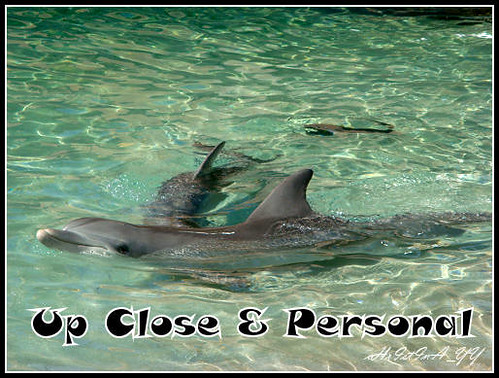 Sea World : Up Close & Personal