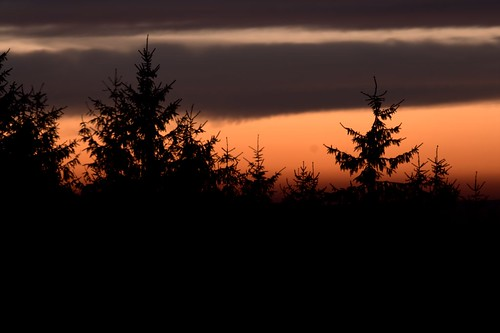 2008-05-16-Trees-03