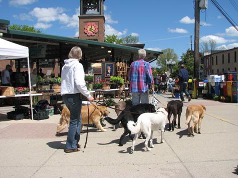 052408 Kerrytown Doggies