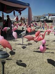 Burning Man 2008 (hjselde) Tags: pink camp festival desert nevada flamingos plastic burningman blackrockcity brc 2008 burningmanfestival burningman2008 burningman08 bm08 burningmanamericandream
