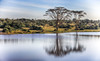 A Peaceful Morning Mirror (AnyMotion) Tags: morningmood morgenstimmung lake see trees bäume reflection spiegelung nature natur wildlife landscape landschaft 2011 sweetwatersgamereserve kenya kenia africa afrika anymotion reisen travel 5d2 canoneos5dmarkii landschaftsaufnahmen ngc