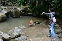 Fetch (Bob Hawley) Tags: longfongwaterfall zhongliaotownship nikond7100 nantoucounty nikon2870mmf3545afd asia taiwan outdoors nature forest trees playing water sticks people