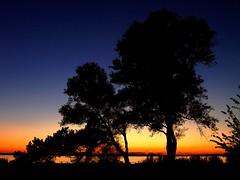 Natures Best (Kirsten M Lentoft) Tags: trees sunset fab lake denmark silhouettes soe themoulinrouge mywinners arresø colorphotoaward aplusphoto momse2600 superbmasterpiece goldenphotographer diamondclassphotographer flickrdiamond ysplix kirstenmlentoft