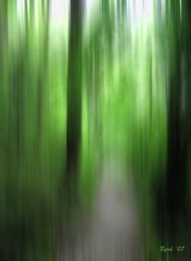 Path through woods (Byrd on a Wire) Tags: abstract green photoshop wow fantasy connamara semiabstract imagepoetry abigfave imageposie betterthangood