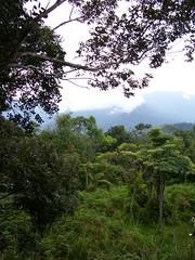 Bukit kutu (Tianyake) Tags: bukitkutu kualakububaru selangor malaysia tropical rainforest hikingtrekking walking running strolling 登山 爬山 远足 徒步 散步 跑步