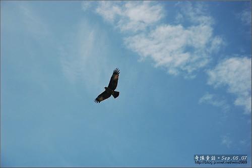 DSC_4447蘭卡威紅樹林保護區老鷹