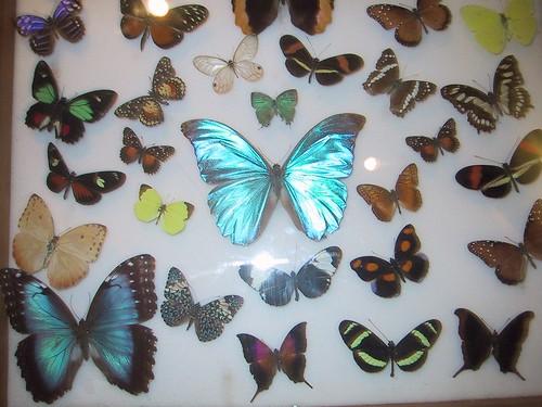 Muestra de mariposas