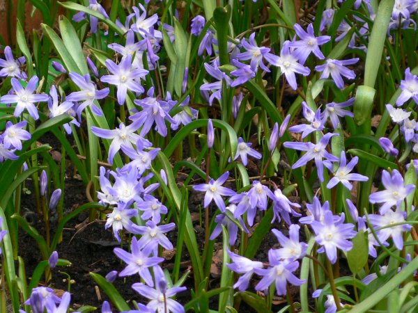 Spring flowers in Bristol