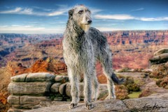 spook on hdr (Kris Kros) Tags: arizona usa dog pet rock photoshop photography high dynamic hound grand canyon perro kris sue range hdr kkg deerhound cs3 photomatix kros kriskros 1xp kk2k lilychip friendscorner kkgallery