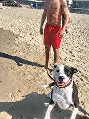 Dog's Best Friend (Alan46) Tags: gay sea dog sun men beach pecs muscles pits israel telaviv sand nipples masculine muscular longhair tattoos torso navel abs nips stud hunks armpits treasuretrail hairychested