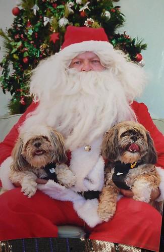 Dogs & Santa
