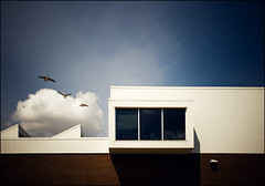 (scottintheway) Tags: blue sky urban cloud canada bird art topf25 fly geese interestingness topf50 gallery geometry goose explore saskatoon lucky catch saskatchewan vignette orgasmic mendel infinestyle ieditoutgimpedgeese
