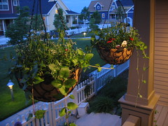 Custom Hanging Baskets