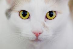 Kitty! (chrisglass) Tags: kitty lila