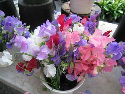 Sweet Peas at Union Square Farmer's Market
